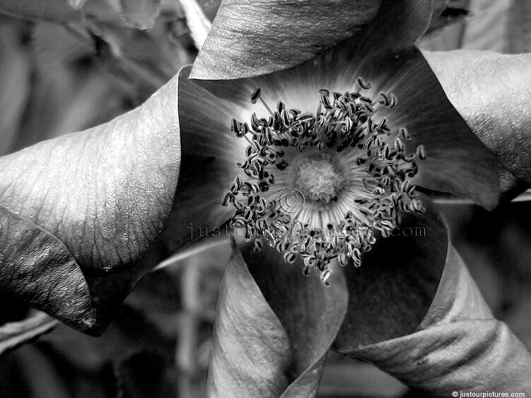 Plant and flower pictures in black and white just our pictures photographer susan location arbg auckland mightylinksfo