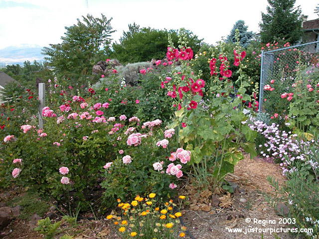 Image Result For Regina Home And Garden A