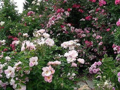 roses escapades Escapade hawaienne 118 € escapade du corps  escapade nomade 90 €  hammam,gommage  rite royal a la rose de damas 120 € la rose dans toutes .